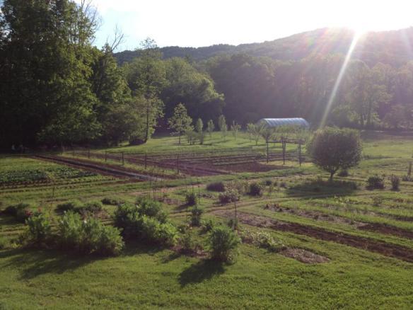 blackberryfarm